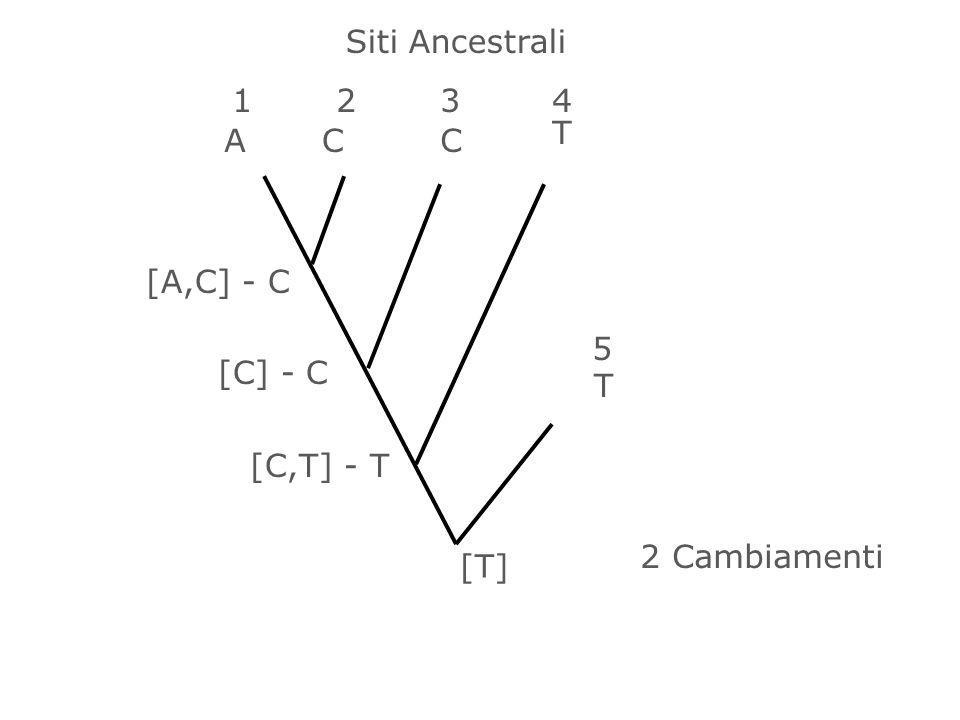 Siti Ancestrali 1 2 3 4 T A C C [A,C] - C 5 [C] - C T [C,T] - T